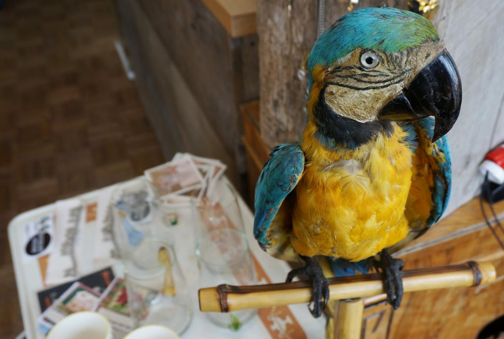 A stuffed parrot is on display inside Afterlife Vintage in Salt Lake City on Thursday, Nov. 19, 2015. Rishi Deka, Daily Utah Chronicle.