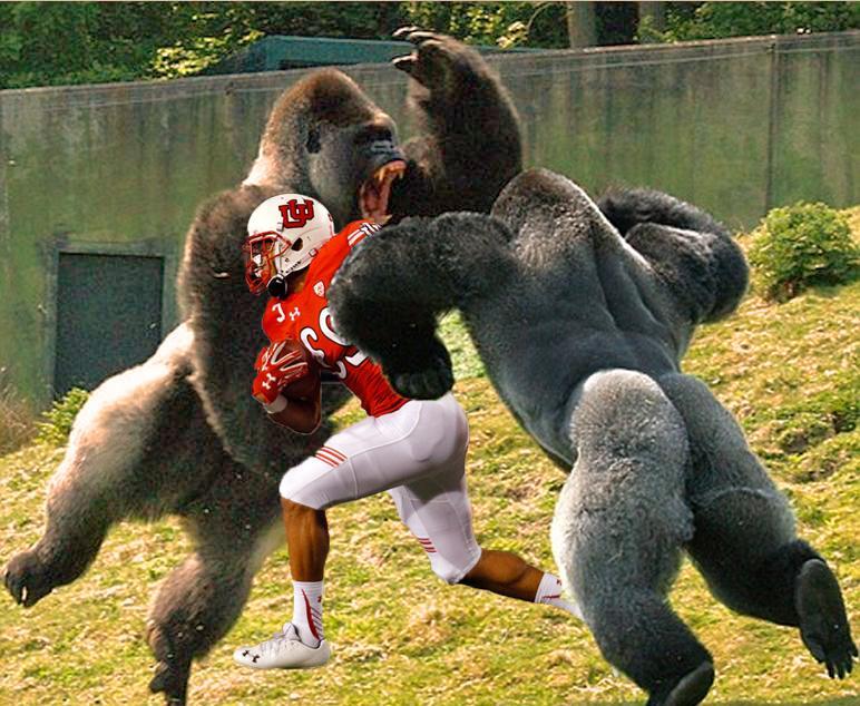 Devontae Booker Skips Practice to Wrestle Gorillas at Hogle Zoo