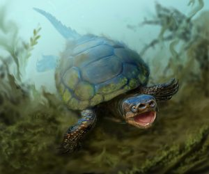 Newly Discovered Turtle Fossil Named After Museum Volunteer