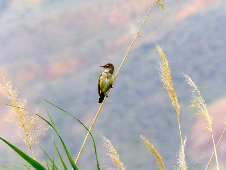 Biologists+at+the+U+Follow+Birds+on+10%2C000+Kilometer+Migration