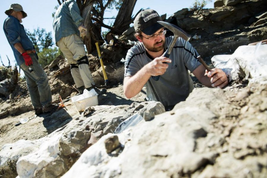 Paleontologist+Randall+Irmis%2C+the+curator+of+paleontology+at+the+Natural+History+Museum+of+Utah%2C+extricates+a+fossil+in+Oct.+2017.+Mark+Johnston%2FNHMU