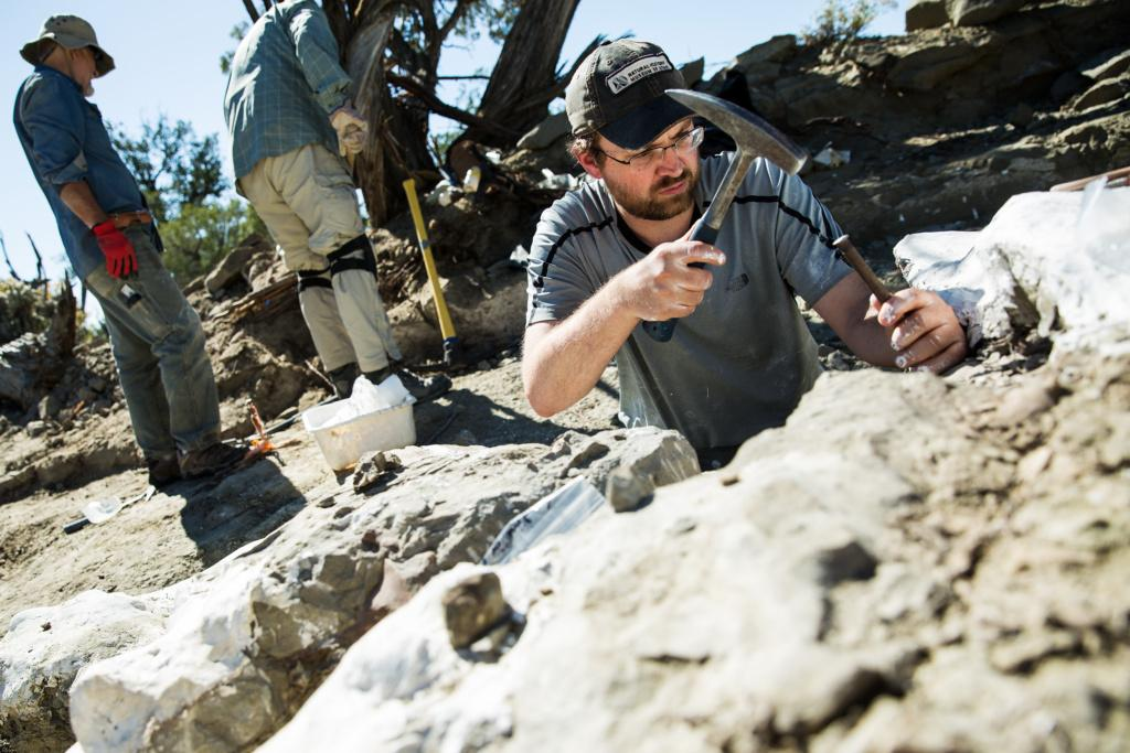 Paleontologist Randall Irmis, the curator of paleontology at the Natural History Museum of Utah, extricates a fossil in Oct. 2017. Mark Johnston/NHMU