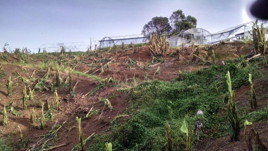 University of Utah metropolitan planning Professor Ivis Garcias family farm in Puerto Rico was among those destroyed by Hurricane Maria.