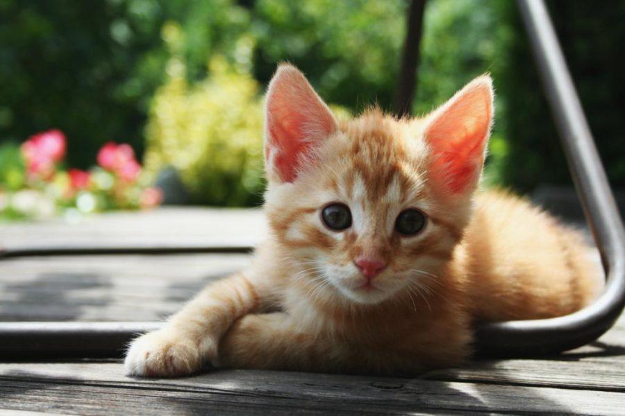 A cute orange tabby basks in the sunlight.