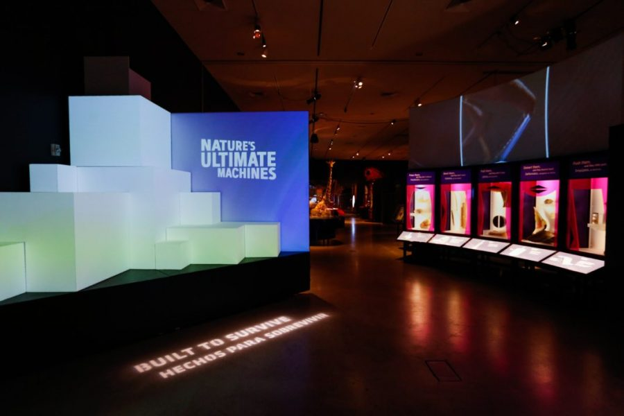 Nature's Ultimate Machines, a new exhibit at the Natural History Museum of Utah, opens Feb.10.   (Photo by: Justin Prather / Daily Utah Chronicle)