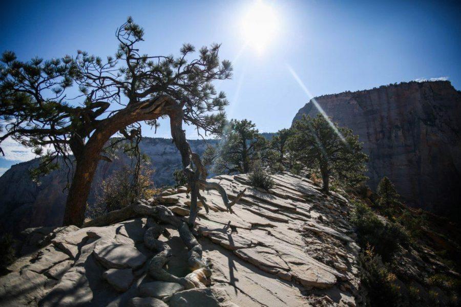 Zion+National+Park+in+Utah.+