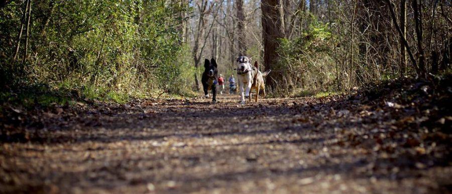 Parkin: Explore Utahs Dog-Friendly Hikes