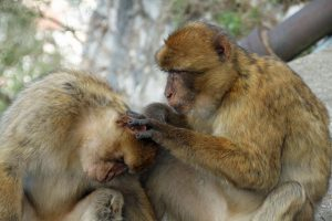 Richards: Animal Experimentation Concern at the U
