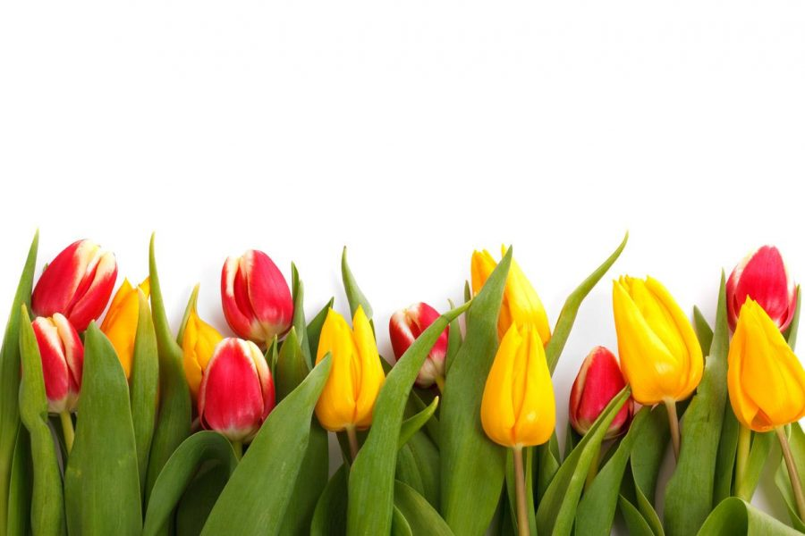 Thanksgiving+Point%27s+Tulip+Festival+is+the+Perfect+Spring+Experience