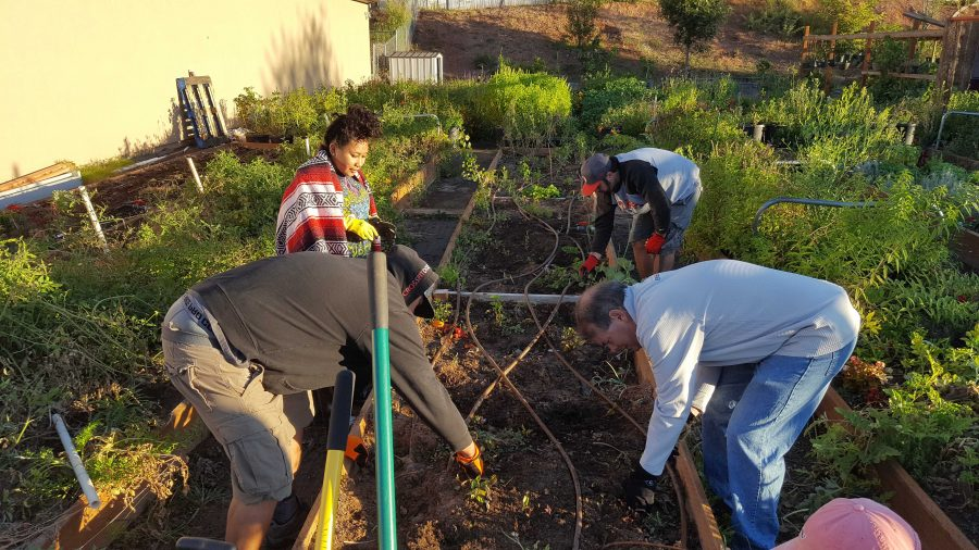 Gardening+at+Legacy+of+Lowell+Saturday+Service+Project+2017.+Courtesy+of+the+Bennion+Center