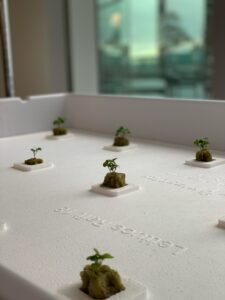New Hydroponic Gardens Sprouting at the U