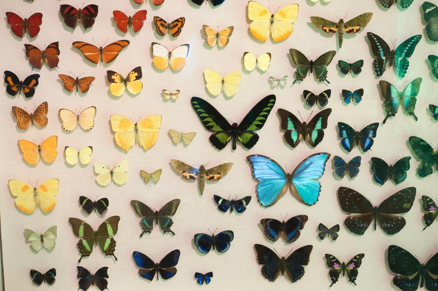 Butterfly Installation at Thanksgiving Point | Photo by Palak Jayswal