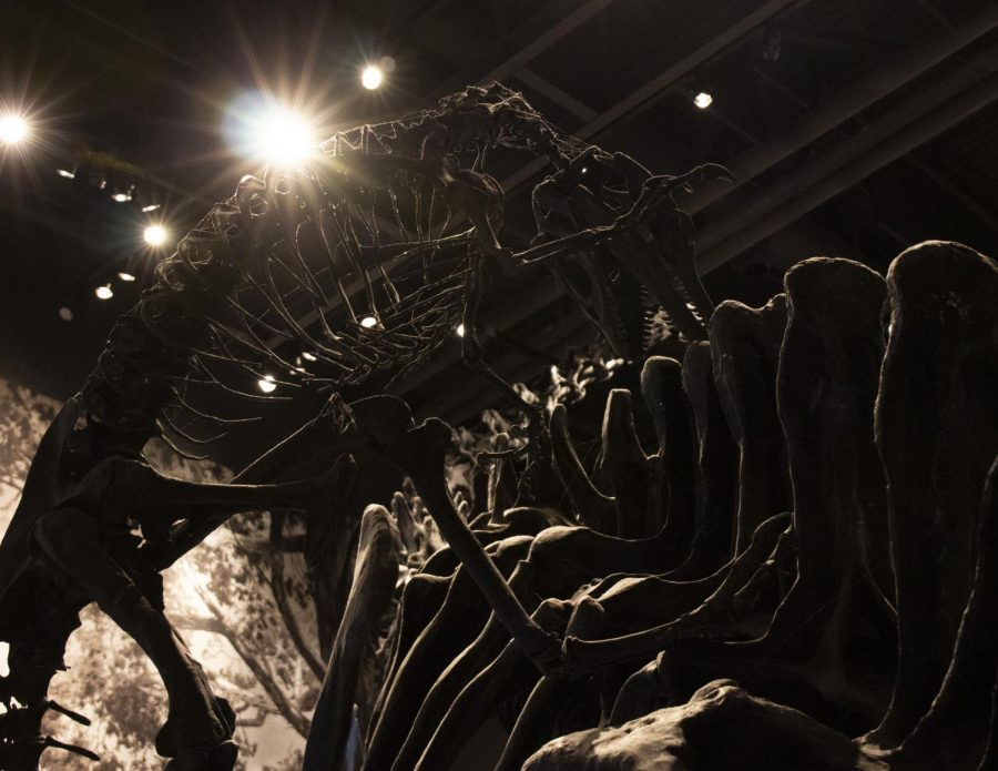 Old Bones, New Discoveries at the Natural History Museum of Utah