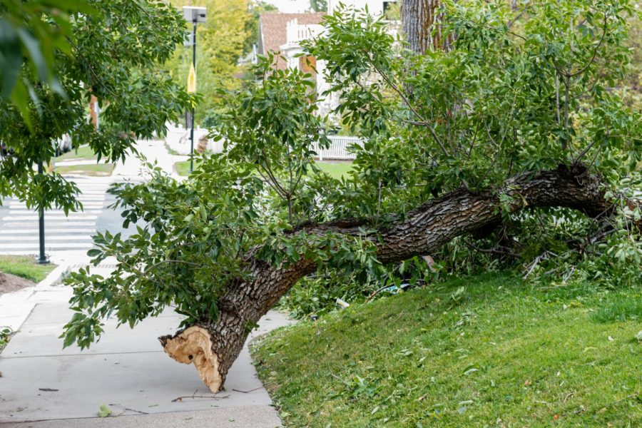 Fallen+trees+and+other+debris+strewn+across+Salt+Lake+City%27s+East+Central+neighborhood+after+a+powerful+windstorm+on+Tuesday%2C+Sept.+8%2C+2020.+Some+streets+are+completely+blocked+and+cars+crushed.+%28Photo+by+Jack+Gambassi+%7C+The+Daily+Utah+Chronicle%29