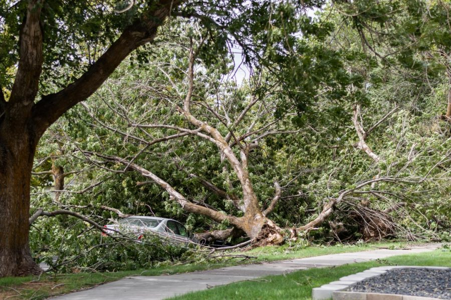 Fallen trees and debris strewn across Salt Lake City's East Central neighborhood on Tuesday, Sept. 8, 2020 after a powerful windstorm. Some streets are completely blocked and cars crushed. (Photo by Jack Gambassi | The Daily Utah Chronicle)
