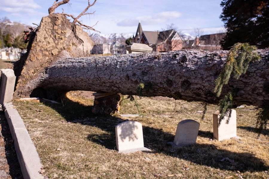 Salt Lake City Cemetery continues to suffer damages from last Fall's windstorm on Sunday afternoon. (Photo by Maya Fraser | The Daily Utah Chronicle)