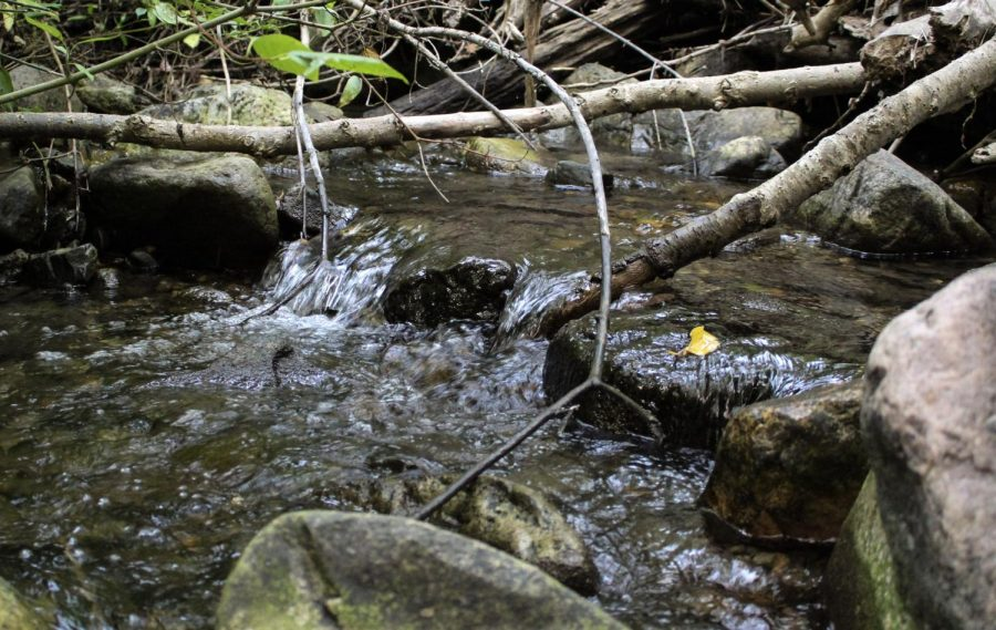 Mill Creek located in Mueller Park Canyon, Utah on Sunday, Aug. 29, 2021 (Photo by Brooklyn Critchley | The Daily Utah Chronicle)